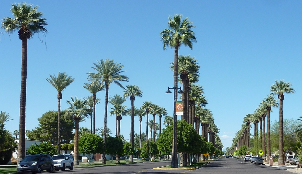 Nestled among the massive suburbs of Phoenix's West Valley is the lively and charming Litchfield Park. Find out what makes it so special.