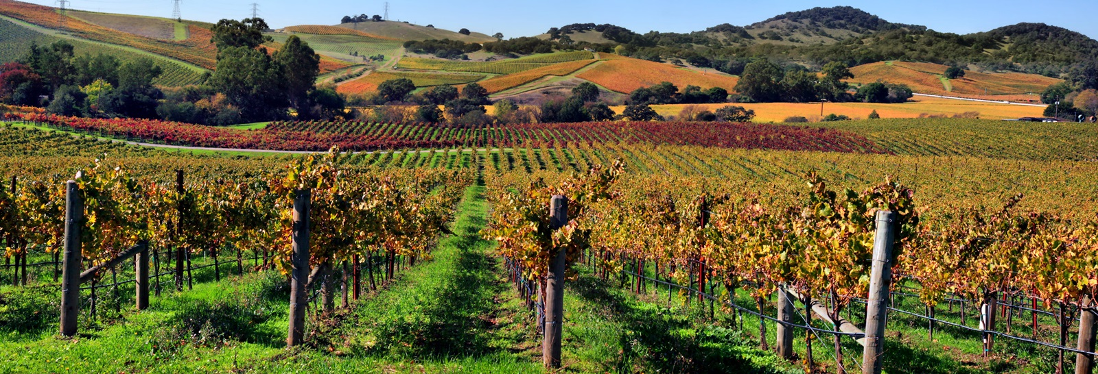 Day Trips from Sacramento: 9 Places so Great You Might Just Move There
